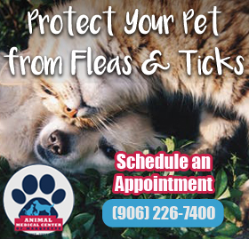 Learn More About Flea and Tick Protection