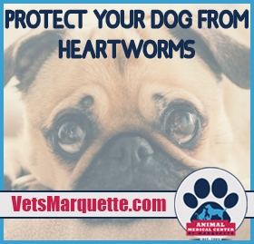 Learn More About Heartworm Disease At Animal Medical Center