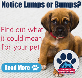 It\'s Lumps and Bumps Month at Animal Medical Center