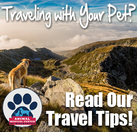 Learn To Travel Safely With Your Pets