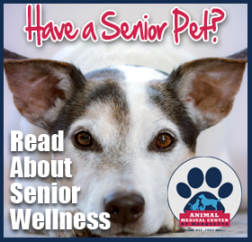 Learn About Senior Pet Care At AMC