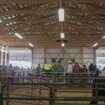 Jam packed stands at the Marquette County Fair during the 4-H Livestock Sale 2015
