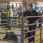 Owen showing his final pig with 4-H during the Livestock Auction at the Marquette County Fair 2015