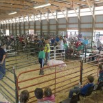 Young boy showing a pig for his first time at the Marquette County Fair 2015