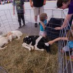 Everyone really loved the calf brought to the petting zoo.